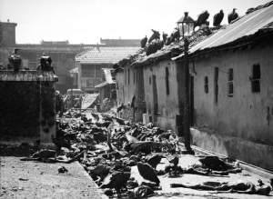 Vultures feeding on corpses lying abandoned in alleyway after Bengal famine