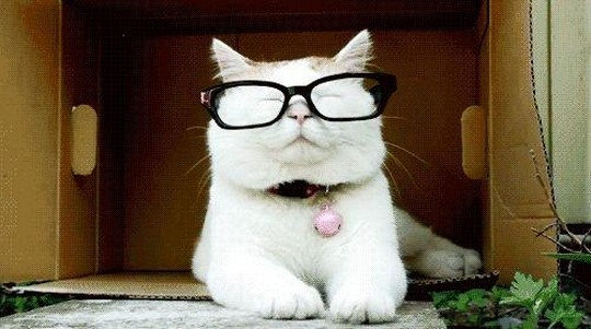 Power of Women - Smart Cat