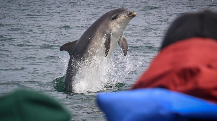 ecoventures_dolphin_trip3