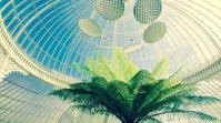 15 Things to do in Glasgow Scotland - Glasgow Botanic Gardens